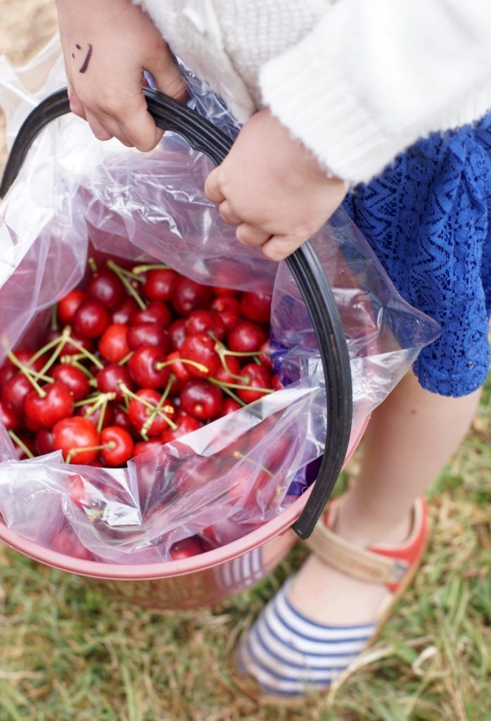 HOT: Pick Your Own Cherries, Cherryhill Orchards, 474 Queens Rd, Wandin East http://tothotornot.com/2015/12/cherryhill-orchards/