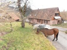 fransa, alsace, at bakımı