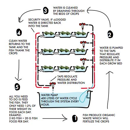 45 best images about aquaponics on pinterest gardens for Fish garden system