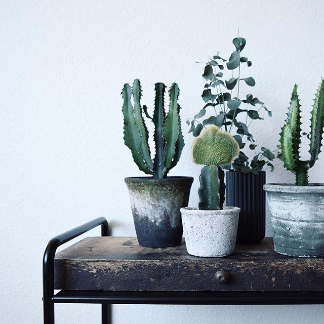 Omplantning føles altid som at få nye rødder De to potter til venstre er fra 1000 ting i Aarhus - den til højre er fra Søstrene Grene #cactus