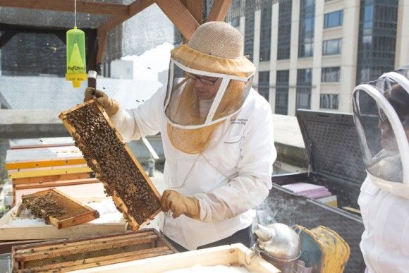 Seattle Chef Generating Buzz About Bees, Honey | Gavin Stephenson, the former chef of London's Savoy hotel who has overseen kitchens at The Georgian and Shuckers restaurants at the Fairmont Olympic Hotel in Seattle for more than a decade, began his beekeeping program three years ago on the rooftop of this historic hotel that stands as a regal homage to a more refined […]