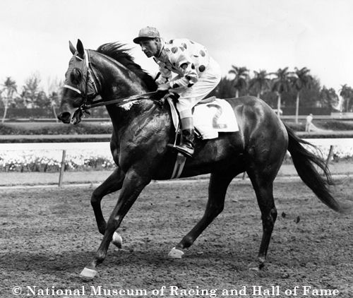 Nashua and Eddie Arcaro- Horse of the Year in 1955