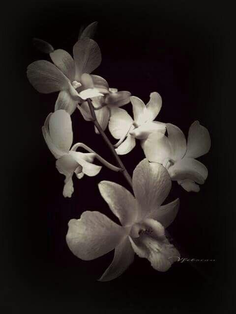 Flower is timeless...