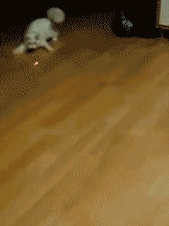 The power of the red dot haha | Follow us for more fun pet videos and photos @gwylio0148