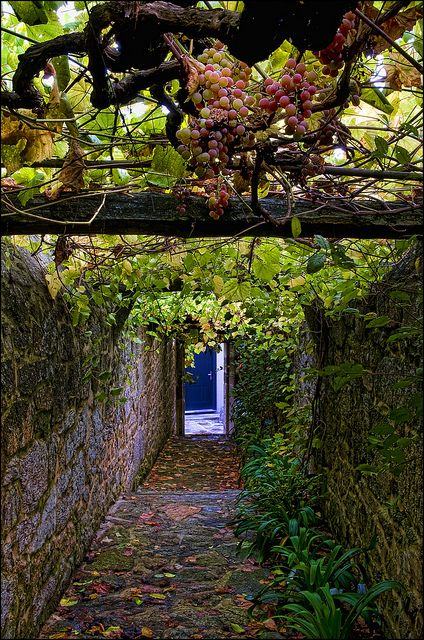 Grapes hanging in a beautiful narrow alley in Santiago de Compostela, Galicia, Spain (by Mabelle Imossi).