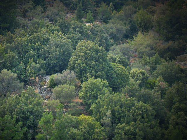 Άρωμα Ικαρίας: Το αντιπειρατικό σπίτι, η τέχνη των Ικάριων για τη...
