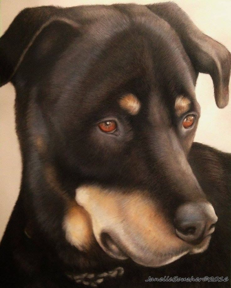 Max ~ 11x14 mixed media by Janelle Boucher