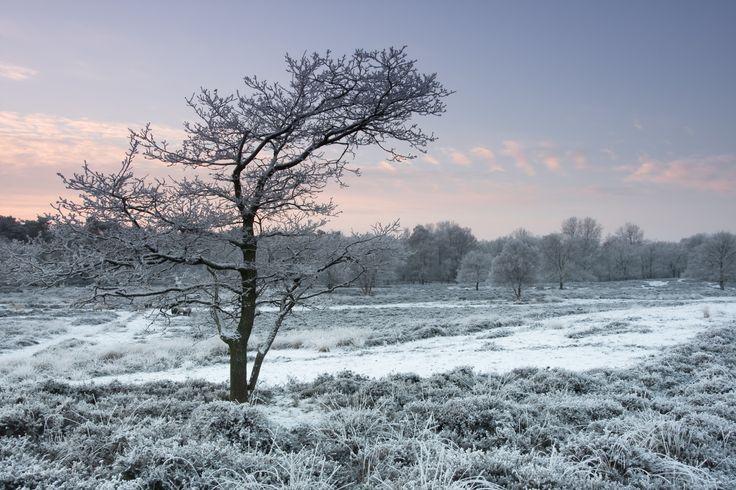 winter-in-gasterse-duinen-287966.jpg (3888×2592)
