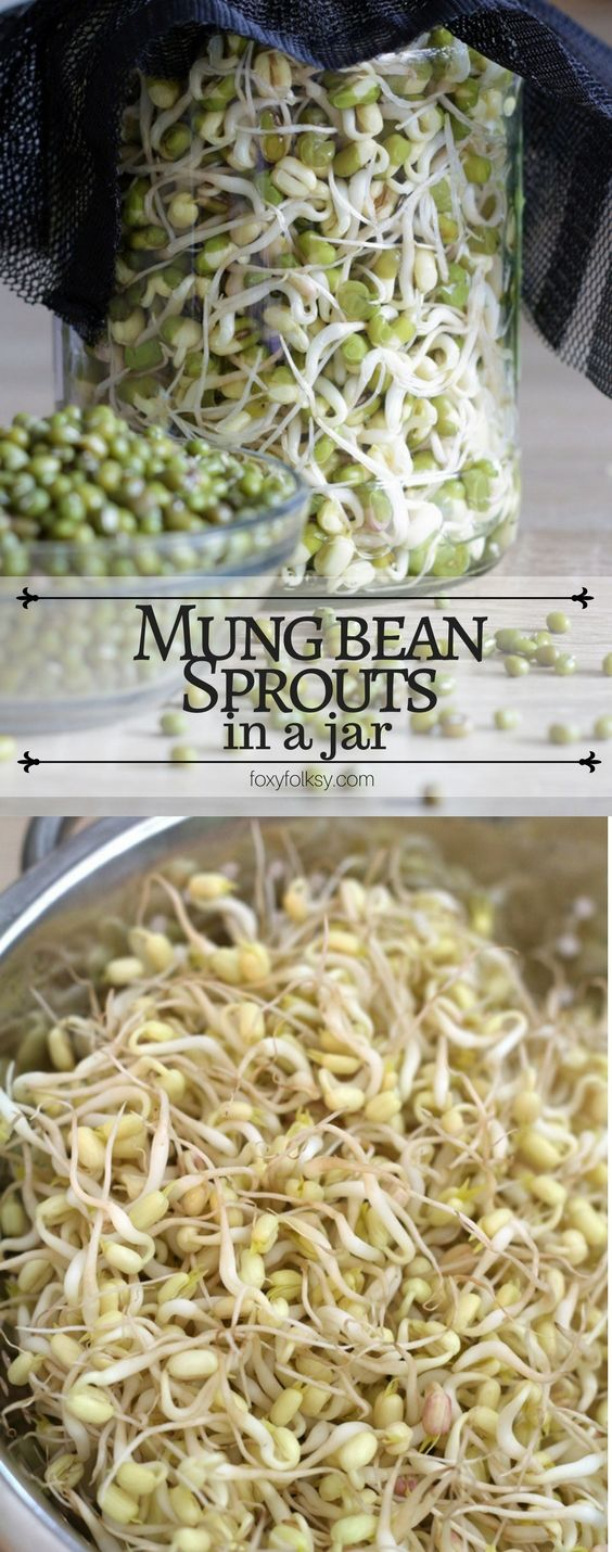 Learn how to sprout mung beans in jars in only 3 days! | www.foxyfolksy.com