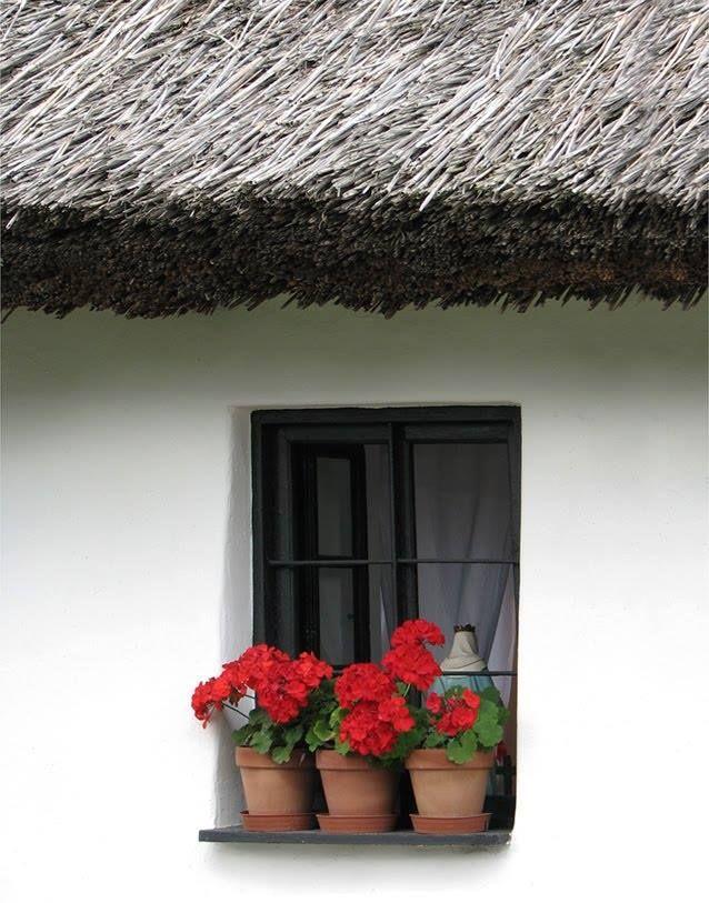 Muskátlis ablak - Mezőkövesd - Északi-középhegység. Hungary