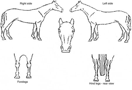 horse identification form google search horse anatomy