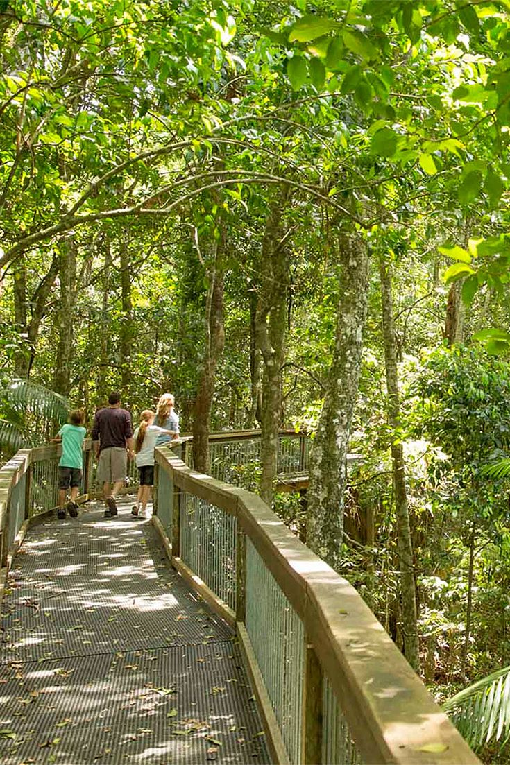 While in Port Macquarie, we recommend you pop out of the Port to the Sea Acres Rainforest Centre and take a stroll through the unique wetland.