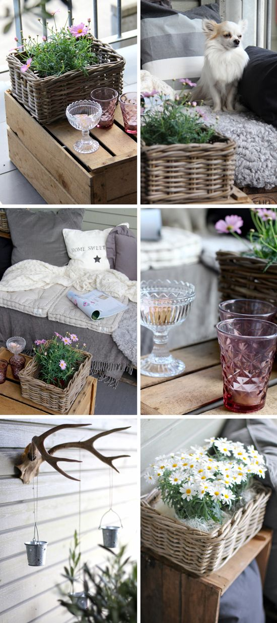 Love the muted colors and charming details... oh, and the cute little chihuahua too!