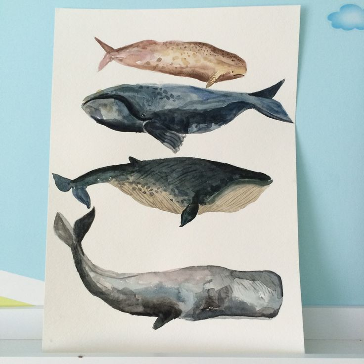 Whales, watercolor