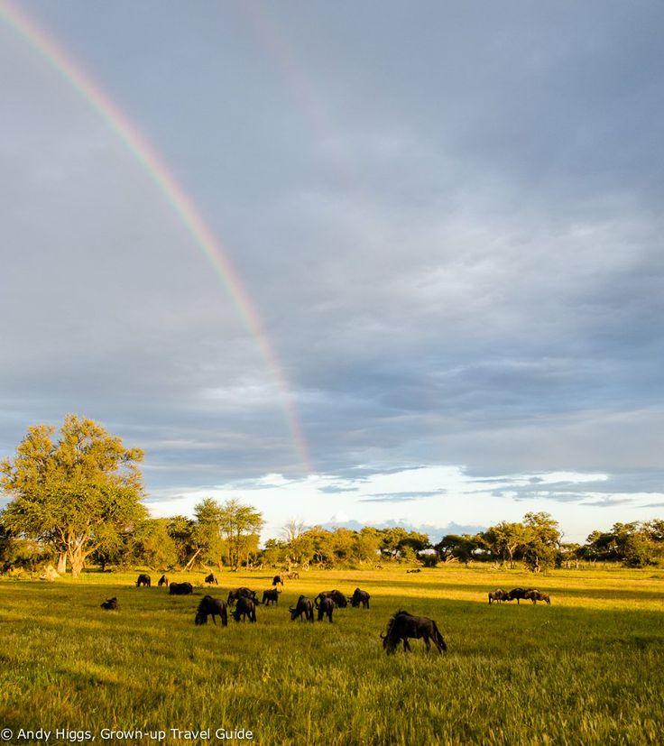 The perfect base for your African safari - Bomani Tented Lodge in Zimbabwe