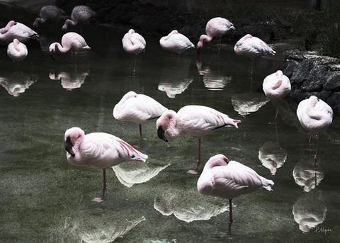 House of Beatniks Flamingos Print (various sizes) 50x70cm $95 (https://norsu.com.au/collections/new/products/house-of-beatniks-flamingos-print-50x70cm)