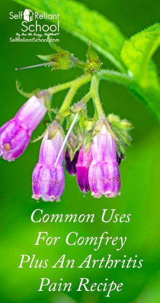 Some of the common (and historical) medicinal uses for comfrey leaf, plus how to grow it and a recipe for an arthritis pain poultice. #beselfreliant