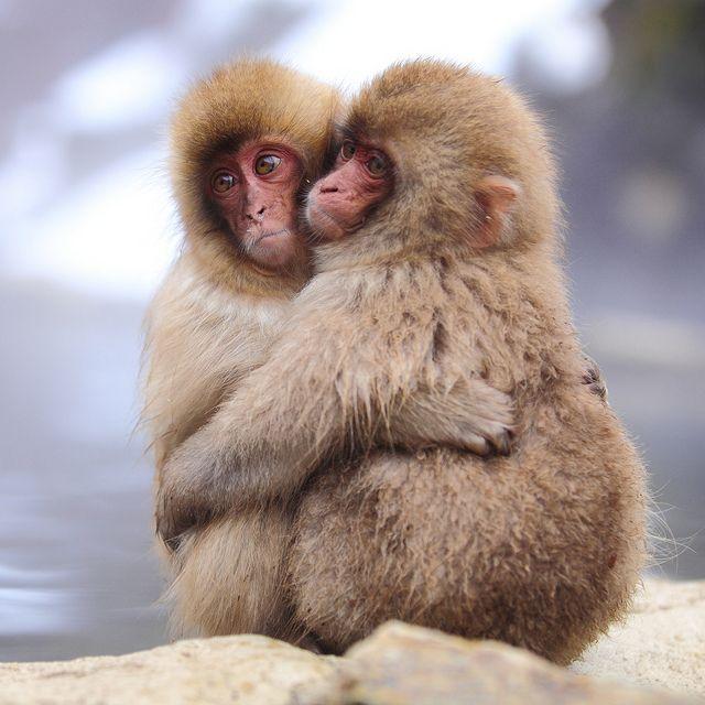 20 fotos românticas entre animais. Eles nos ensinam o verdadeiro amor!