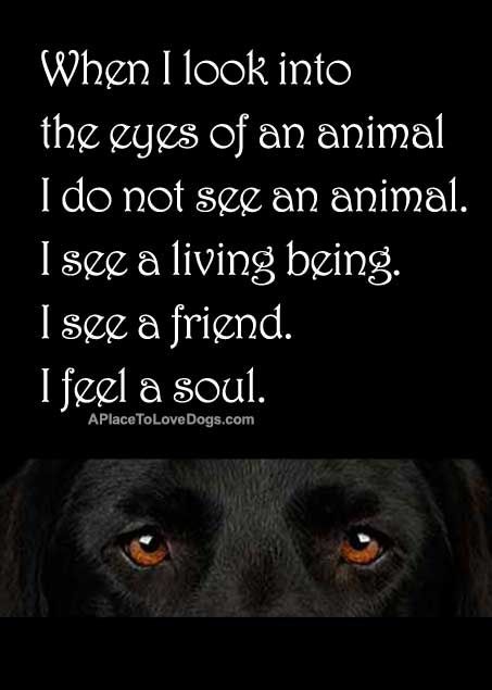 """""""When I look into the eyes of an animal I do not see an animal. I see a living being. I see a friend. I feel a soul."""""""