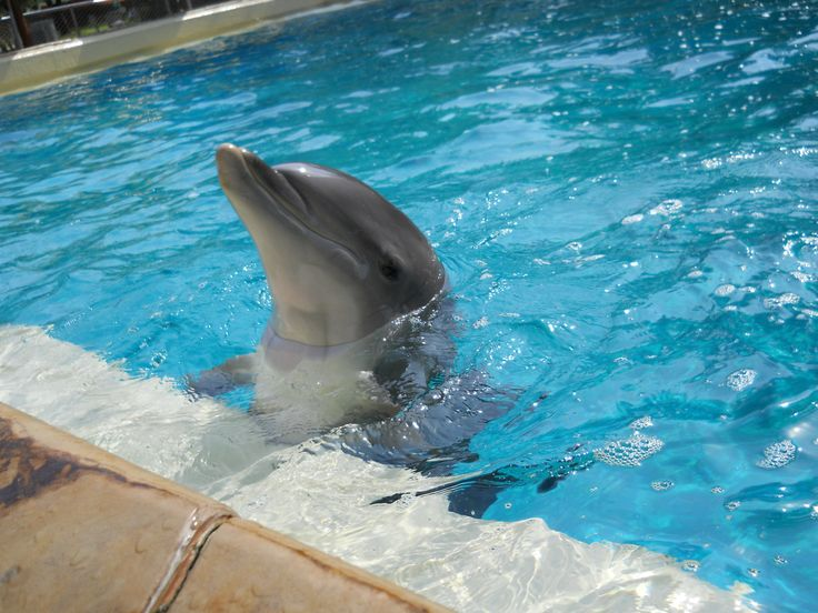 Sea World San Antonio Review And Tips Dolphins Love And Texas