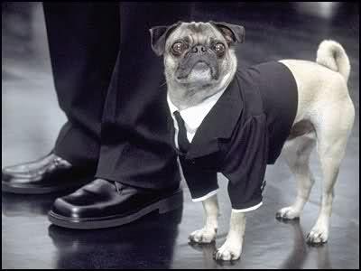 perros perritos pug precio imagenes raza cachorro hombres de negro nombres frank