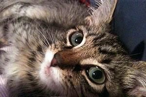 Pet Trust Primer | ASPCA --legal provision for your cat(s) should you become incapable of care