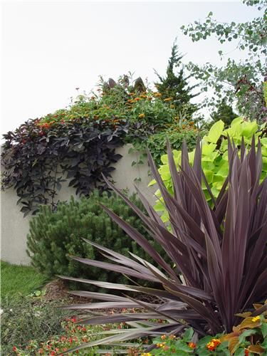 These plants would go beautifully with the brown and tan tones so often found in the natural materials of a Craftsman home. Design by Maureen Gilmer of Morongo Valley, CA. Check out more suggested landscaping plants here: http://www.landscapingnetwork.com/plants/