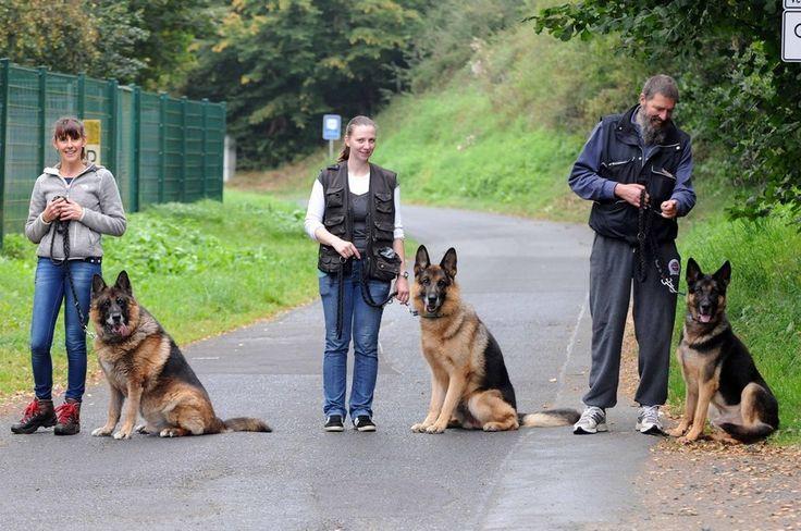 """Cinco """"perros-policía"""" que servían en Bilbao ¿salvados desde Alemania"""