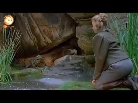 Der Froschkönig - Märchen film( genießen Sie mit Voll )