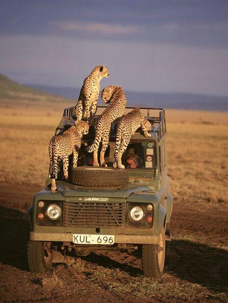 Kitties #LandRover Defender