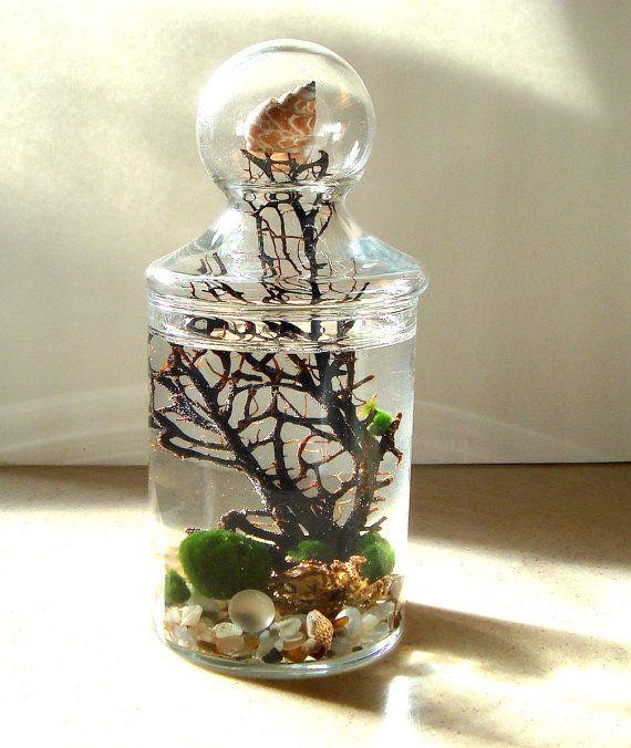 Live Marimo Balls in Globe Top Apothecary Jar Zen Pet Mini