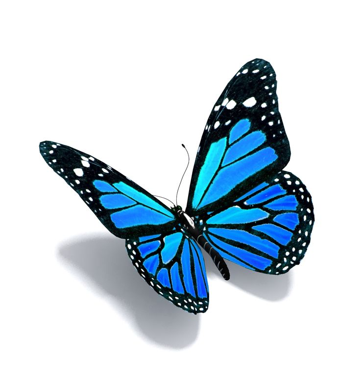 Blue Butterfly Images Hha Open House Page Mcleod