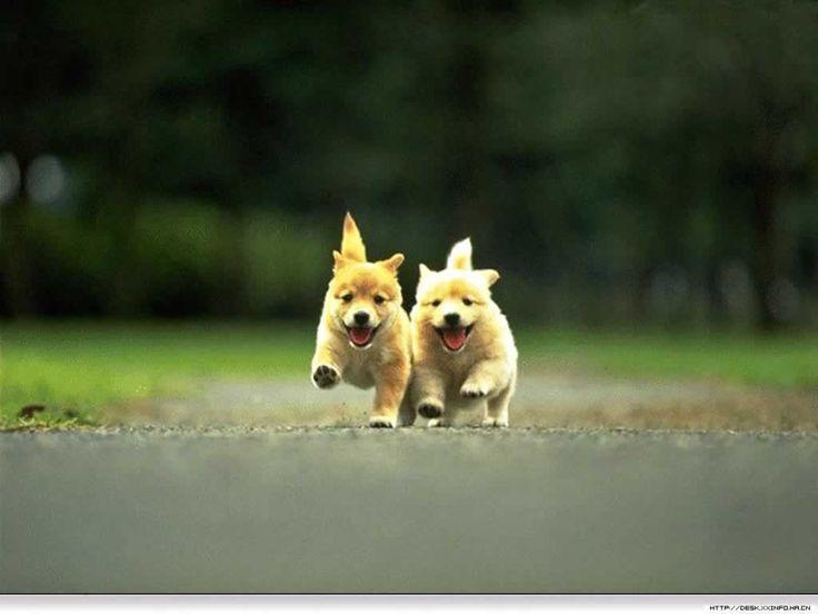 Dogs Wallpaper 25+ best cute puppy wallpaper ideas on pinterest | pets, pet