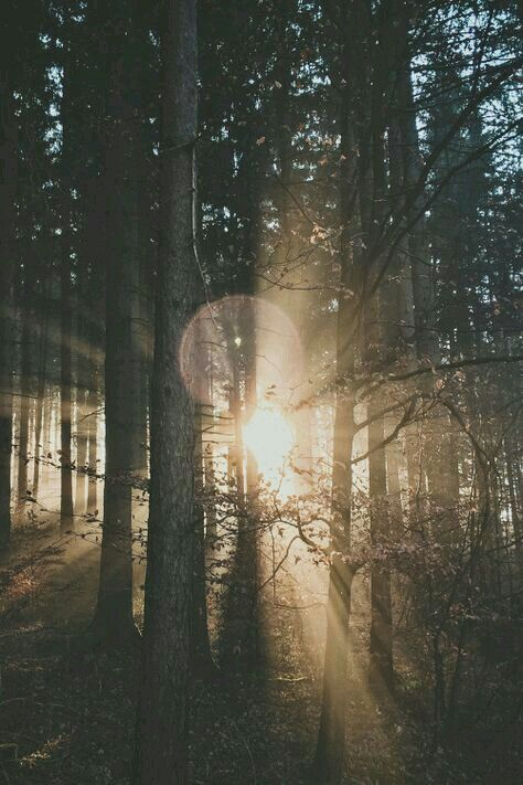 Winter Sunlight ☆ Forest Deep (photo-credit unknown)