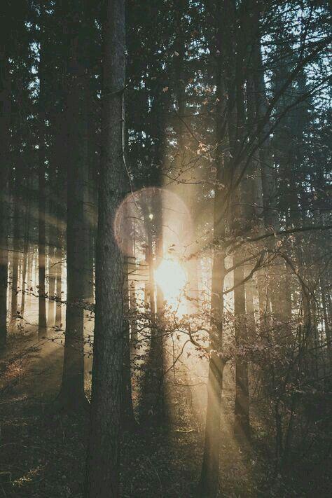 Winter Sunlight ☆ Forest Deep