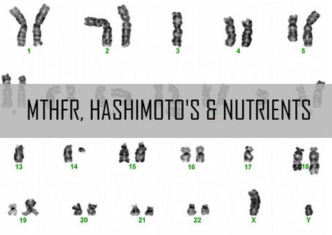 Some individuals with Hashimoto's may have a gene variation that prevents them from properly activating folic acid. This gene variation is present in up to 55% of the European populations, and some have been saying that this variation seems to be more common in those with hypothyroidism.The gene involved is the MTHFR (Methylenetetrahydrofolate Reductase) gene.