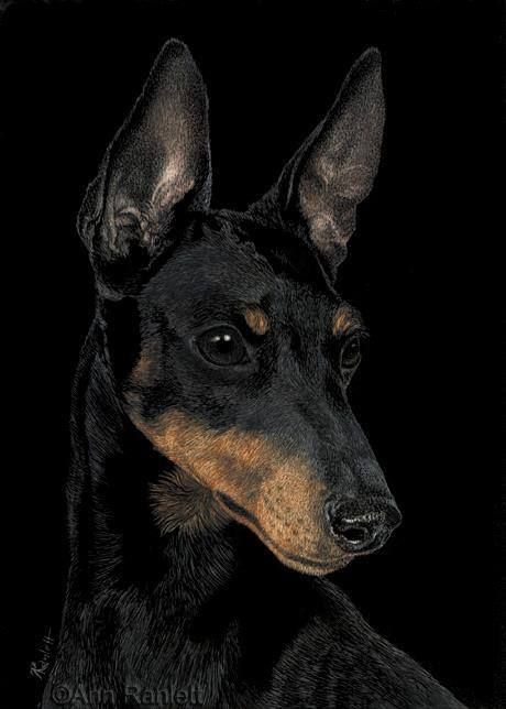 This is Bowie, he is a Toy Manchester Terrier. I am going to say that this painting is amazing. It was all done on an Ampersand Scratch Board. The painting was done by Ann Ranlett. She colored some spots with Derwent Inktense Pencils. Ann - thank you very much for sharing this with us. #Scratchbord #ArtWork