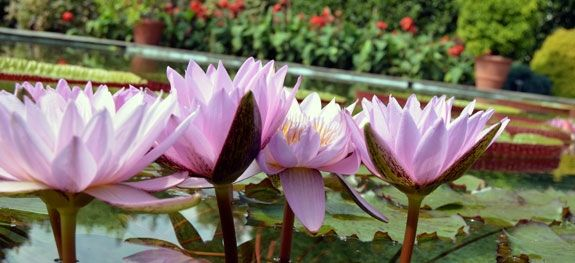 Aprile fa il fiore e maggio gli dà il colore www.plantantiga.com