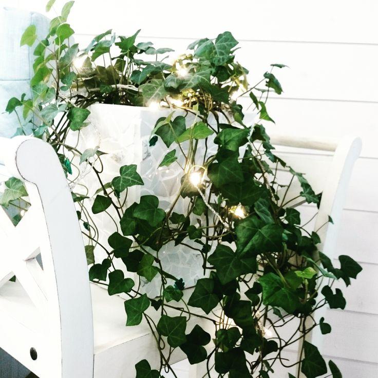 Romantic ivy!