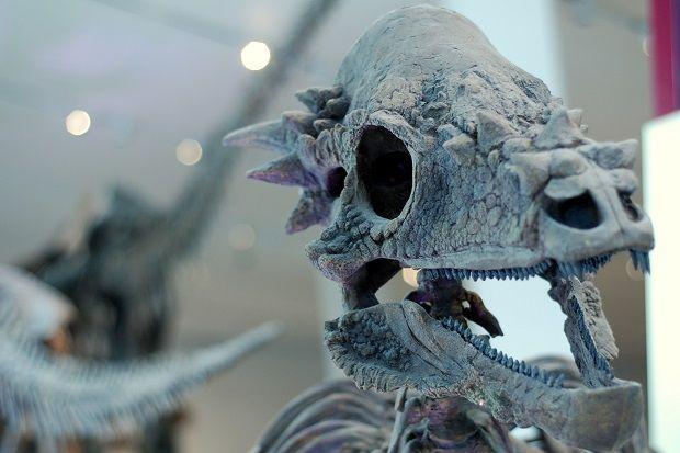 Pachycephaloosaurus dinosaur ROM