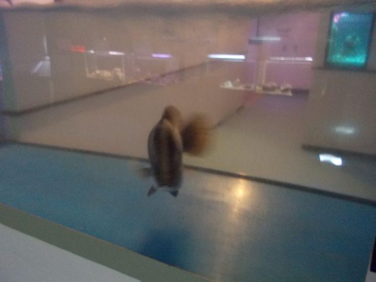 nagisa Aquarium