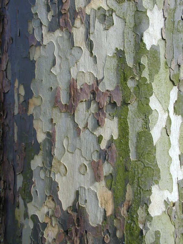 plane tree bark, shades of green, light blue grey, cream and lavender                                                                                                                                                                                 More