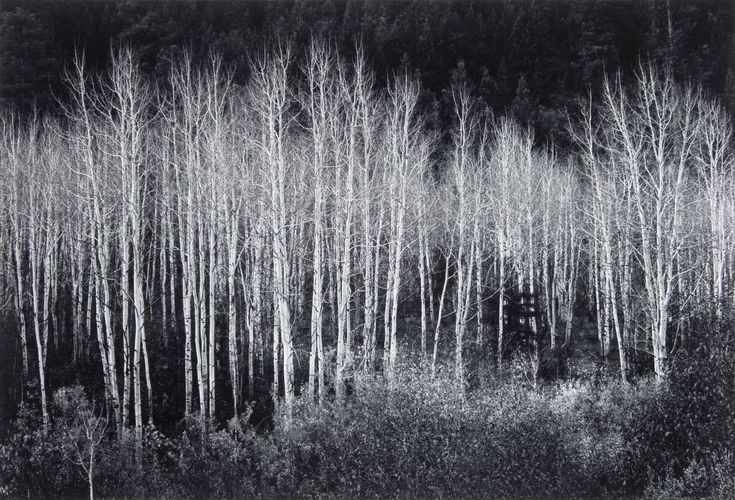 Jean-Bernard Cabana offers up a blog called the World Surrounding Me and I happened upon this article: Trees- Study in Black and White Contrast vs. Ansel Adams trees ... I often times wonder how many of todays modern photographers have ever used film. It truly gives you an appreciation of the works of great masters such as Ansel Adams.