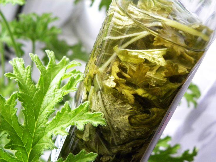 Aromatyczna nalewka z geranium - można ją uzyskać z łatwej w pielęgnacji rośliny, która powinna znaleźć się na parapecie każdego mieszkania.