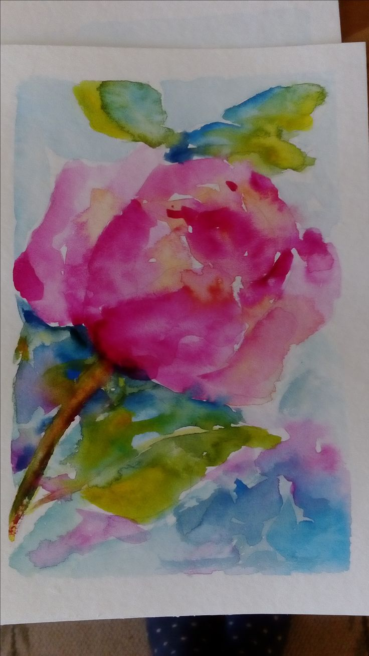 Rose from my  Gardens  Watercolor my colors