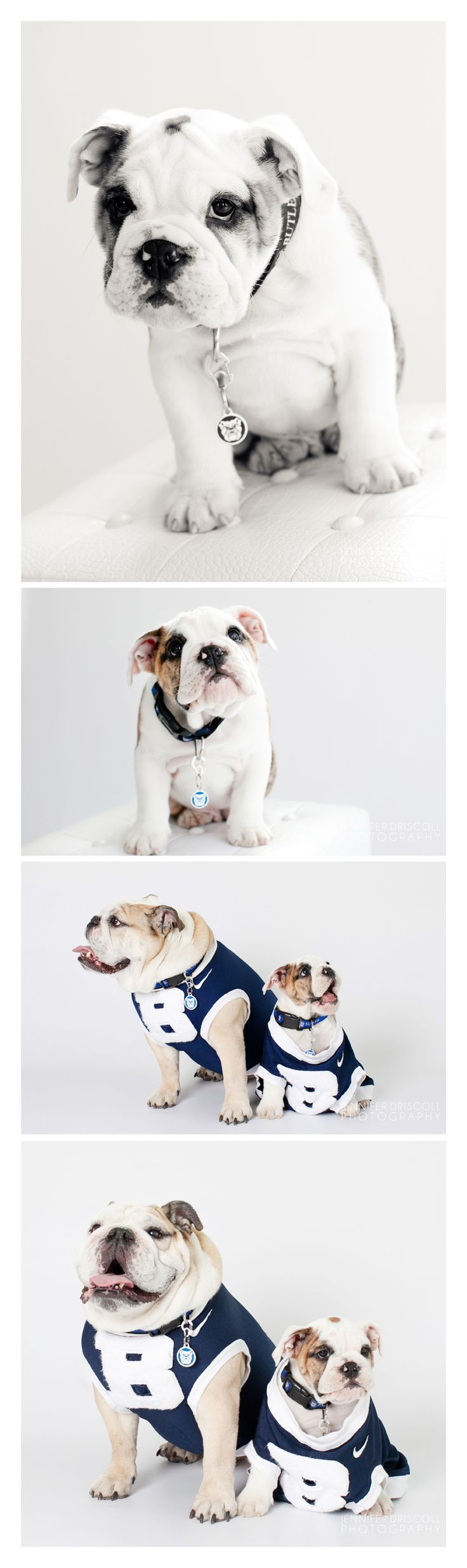 the awesome butler university mascots! so cute!