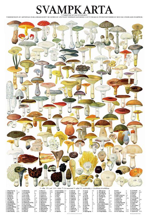 Svampkarta - poster plansch svampar