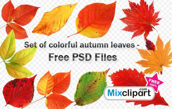 Set of colorful autumn leaves - Free PSD Files