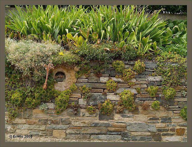 18 best zaun images on Pinterest Fence, Garden art and Close board