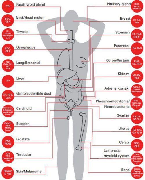 Les principaux marqueurs tumoraux
